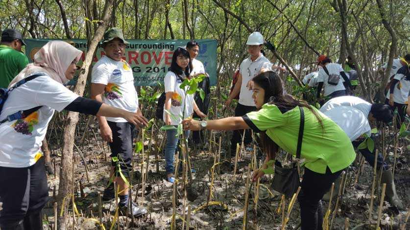 Bibit Pohon Bakau Hutan Mangrove