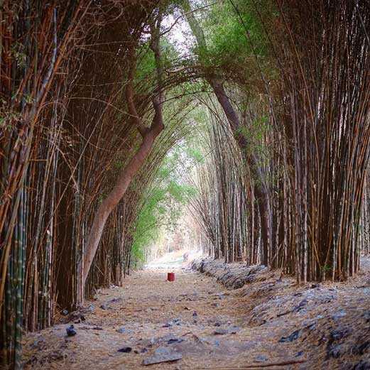 Hutan Bambu Surabaya