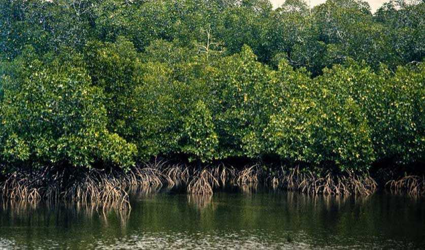 Hutan Mangrove dibibir pantai