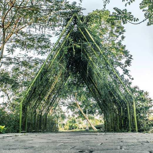 Spot Foto Di Hutan Bambu