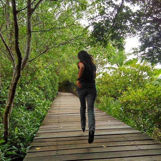 berjalan di hutan mangrove Surabaya